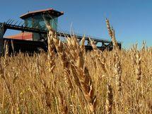 Wheat Charts